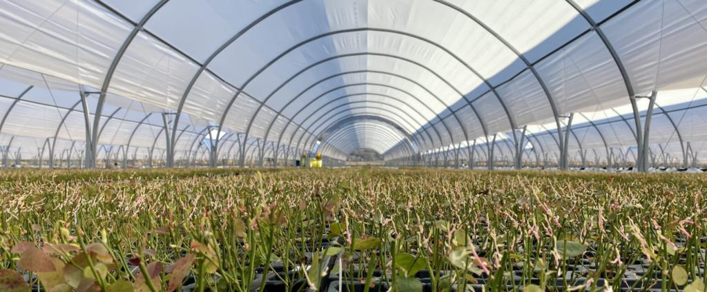 applications drone surveillance des plantes